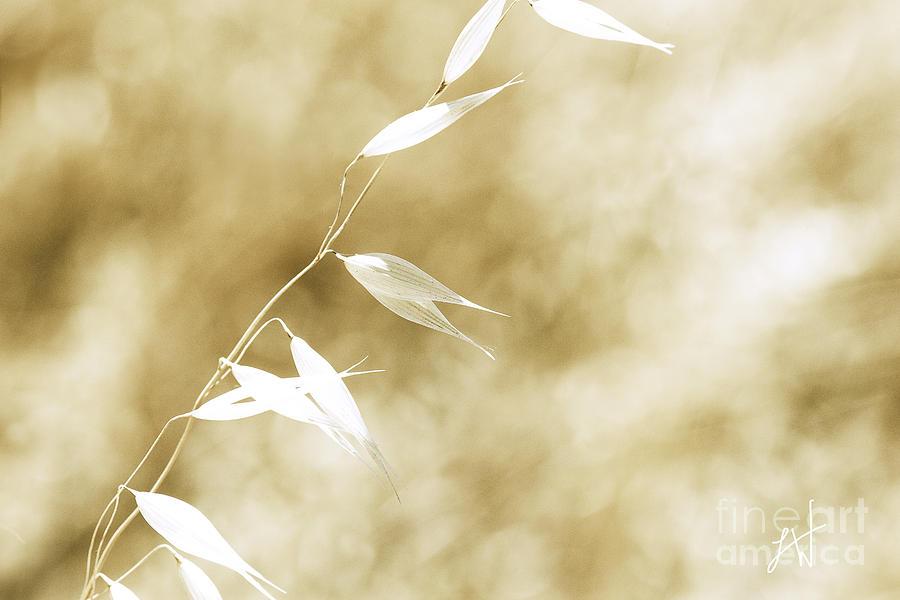 Summer Wheat Photograph - Summer Grass by Artist and Photographer Laura Wrede