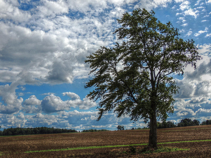 Summer Photograph - Summer In The Country by Shon Saylor