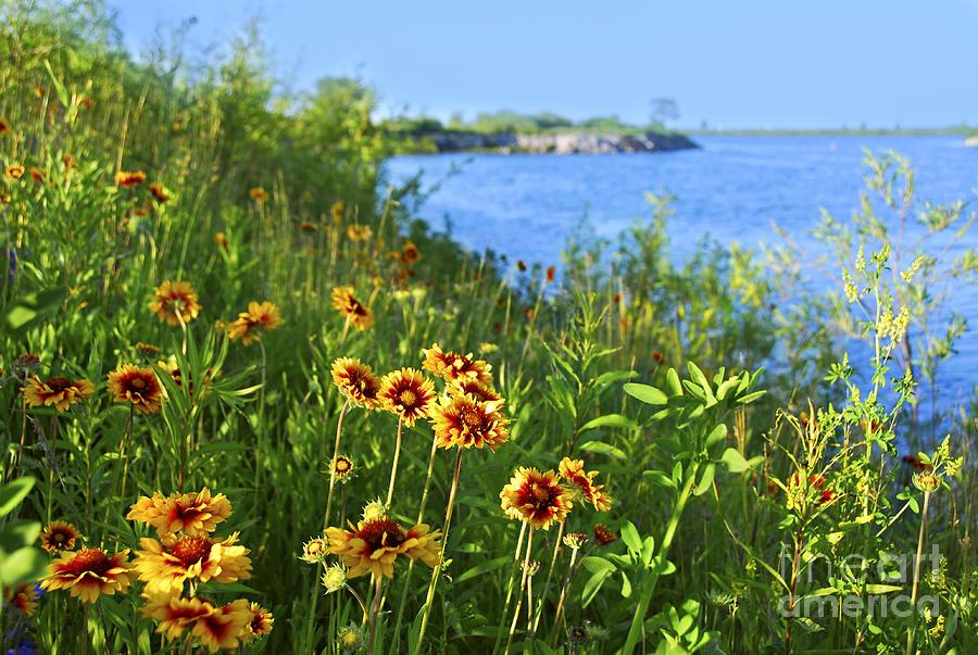 Flower Photograph - Summer In Toronto Park by Elena Elisseeva