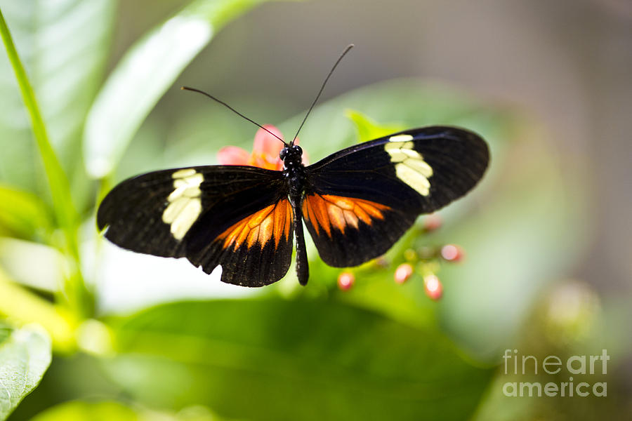 Butterfly Photograph - Summer Love by Leslie Leda