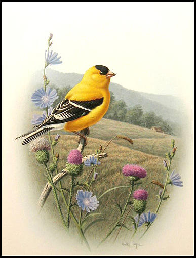 Goldfinch Painting - Summer Morning by Ron Louque
