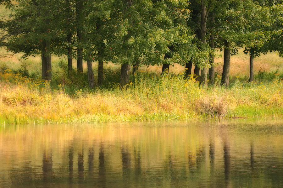 Landscape Photograph - Summer Reflections by Karol Livote