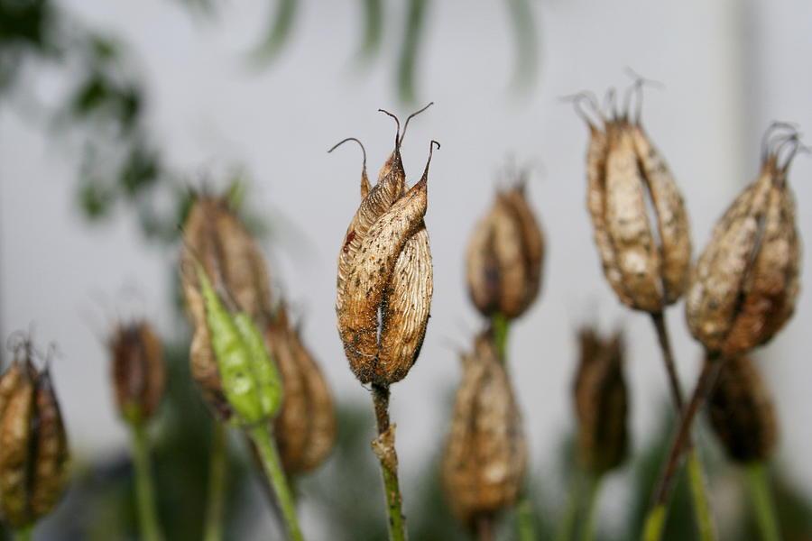 Summer seeds by Harri Spietz