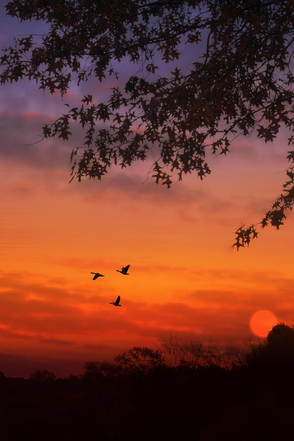 Sunset Photograph - Summer Side Of Life by Tom York Images