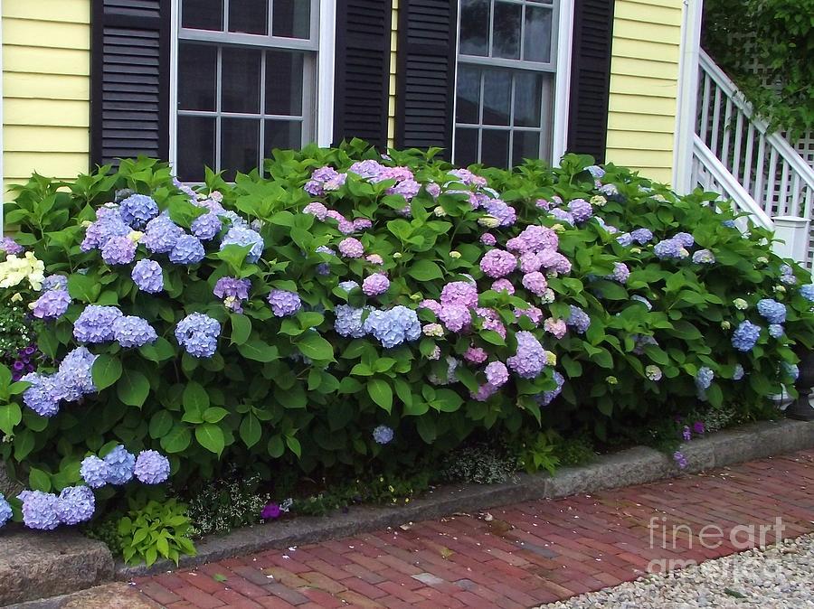 Hydrangeas Photograph - Summer Sidewalk by Michelle Welles