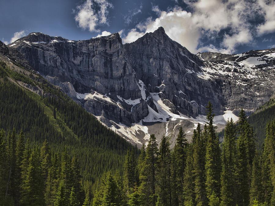 Mountains Photograph - Summer Snow by Jo-Anne Gazo-McKim