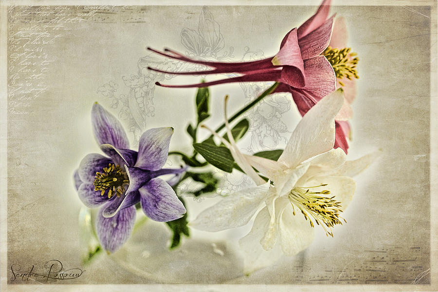 Flowers Photograph - Summer Song  by Sandra Rossouw