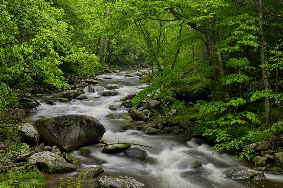 Landscape Photograph - Summer Stream in Great Smoky Mountains  by Darrell Young