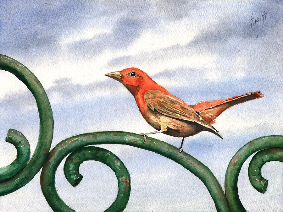 Bird Painting - Summer Tanager by Sam Sidders