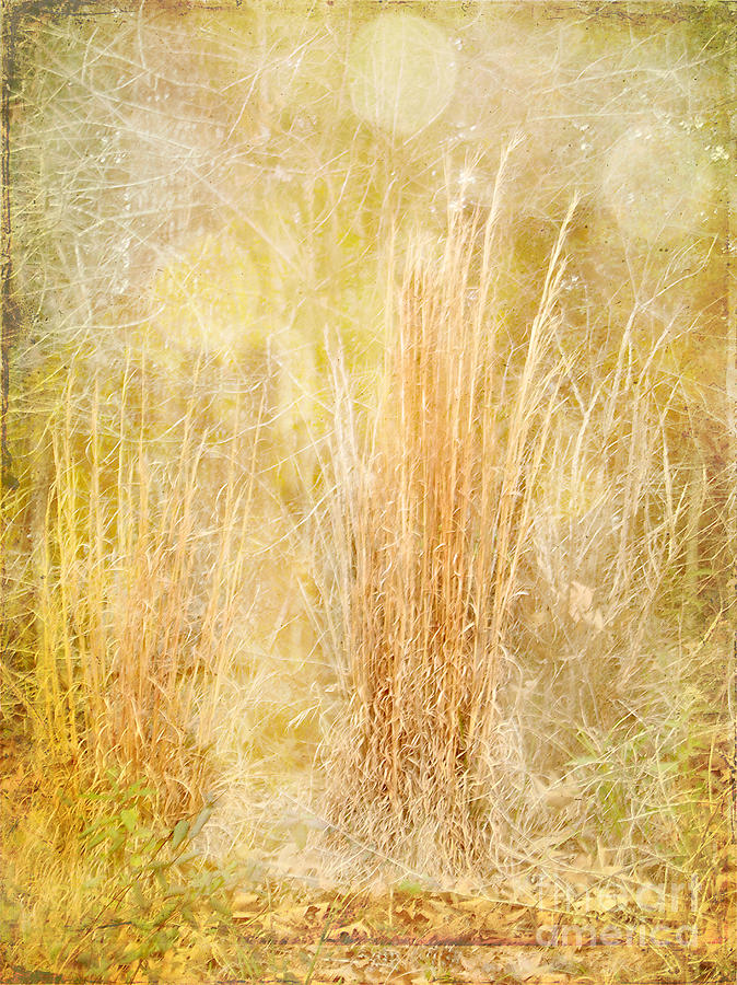 Grasses Photograph - Summers End by Judi Bagwell