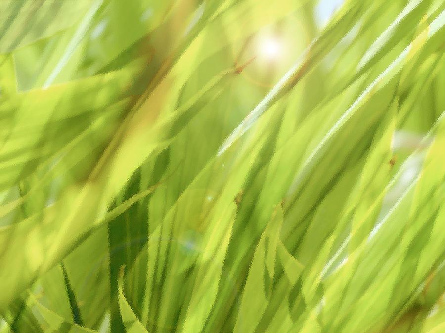 Green Photograph - Summertime Green by Ann Powell