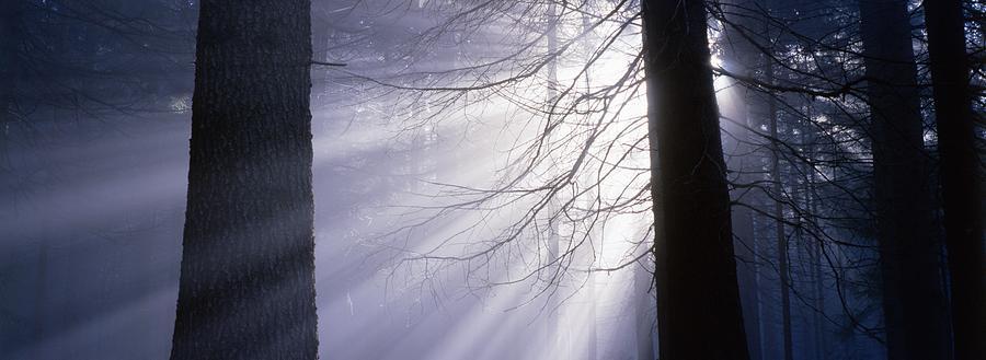 Nature Photograph - Sun Breaking Through Mists by Ulrich Kunst And Bettina Scheidulin