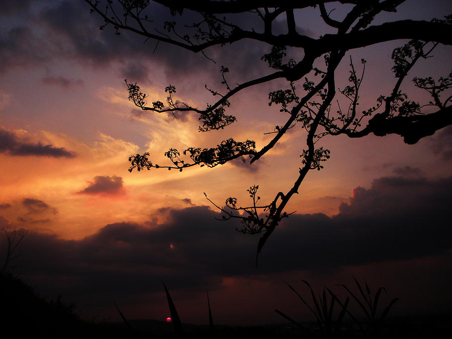 Sunset Photograph - Sun Caught By Branches  by Rosvin Des Bouillons