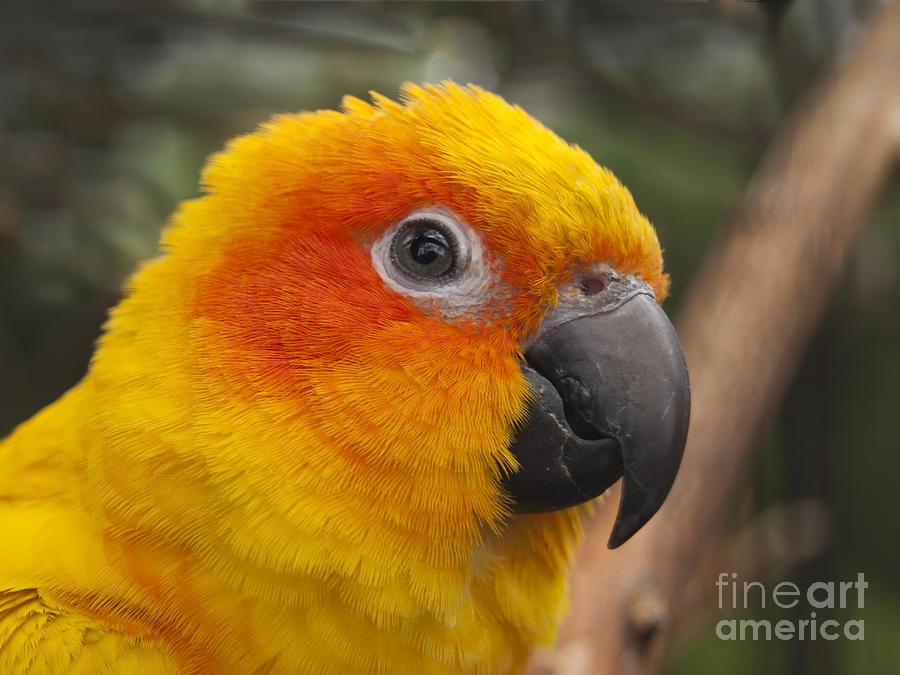 how to take care of a sun conure parrot