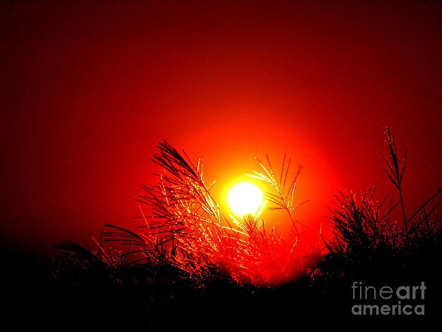 Sun Photograph - Sun Drop by Laurence Oliver