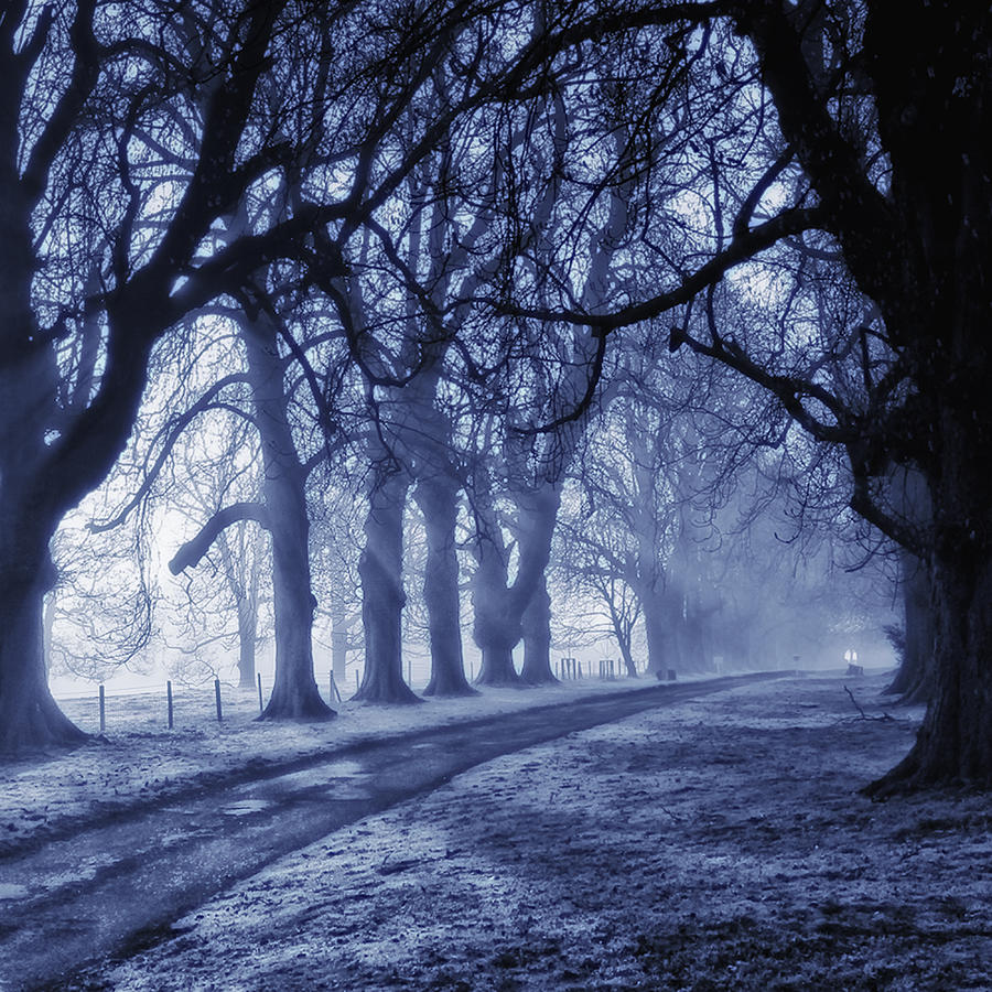 Trees Photograph - Sun Ice And Mist by Martin Crush