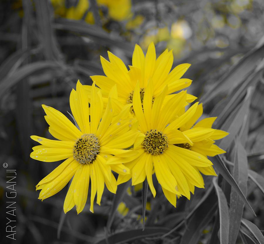 Yellow Photograph - Sun Is Up by Aryan Ganji