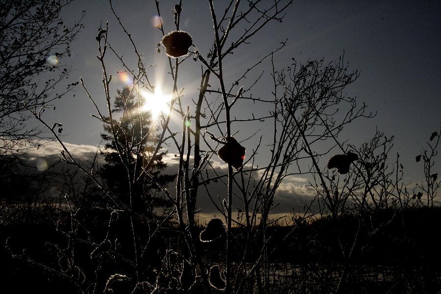 Winter Photograph - sun by Johnathan Evans