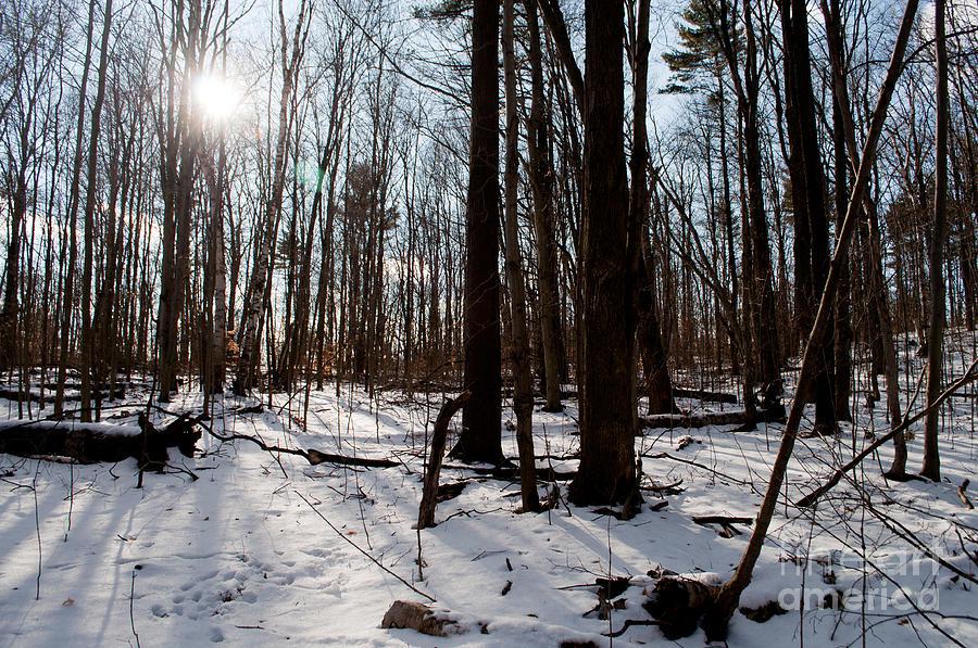 Long Sault Photograph - Sun On The Wild Turkey Trail by Gary Chapple