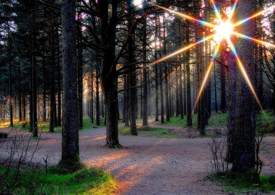 Sun Photograph - Sun Rays by Sonya Kanelstrand
