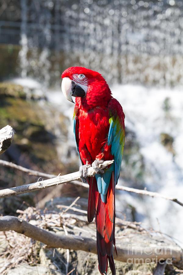 Parrot Photograph - Sun Seeker by David Barker