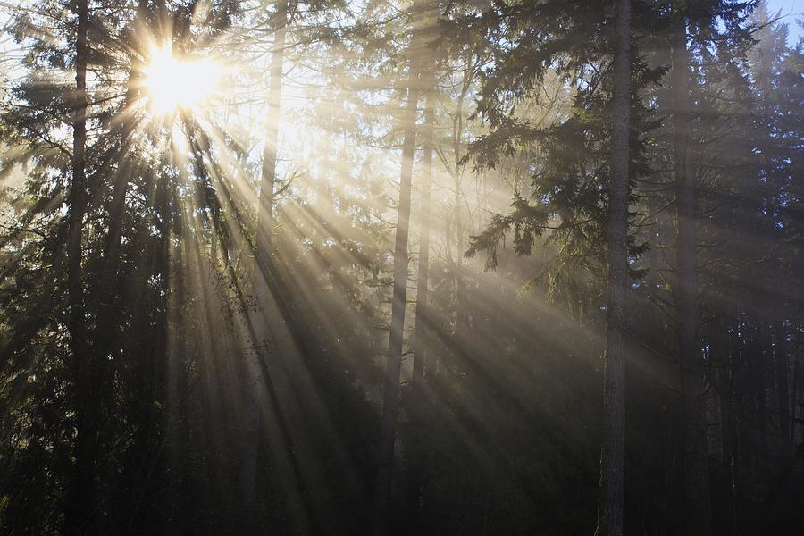 Sun Shining Through Morning Fog And Photograph By Craig Tuttle