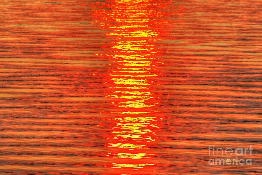 Sun Photograph - Sun Strings by Tap On Photo