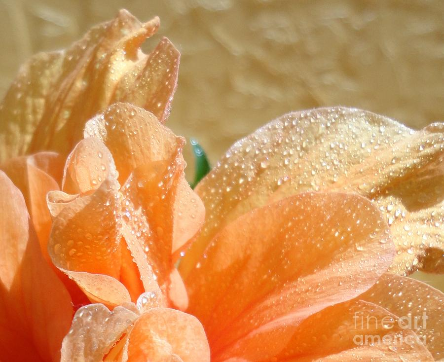 Hibiscus Photograph - Sunbathing by Maria Bonnier-Perez