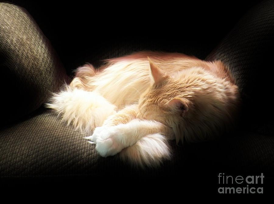 Cat Photograph - Sunbeam Dreams by Judy Via-Wolff