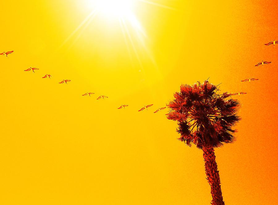 Kunst Photograph - Sunbound by Aurica Voss
