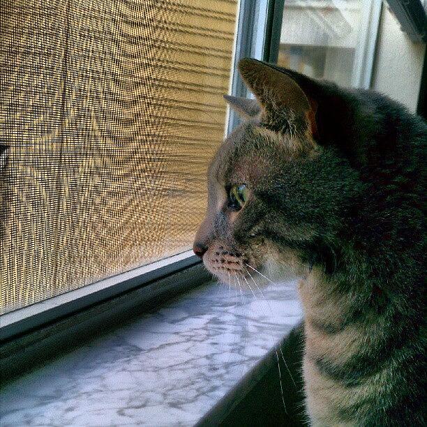 Daydream Photograph - #sunday #cat #kitty #window #gaze by Arayon Shaw