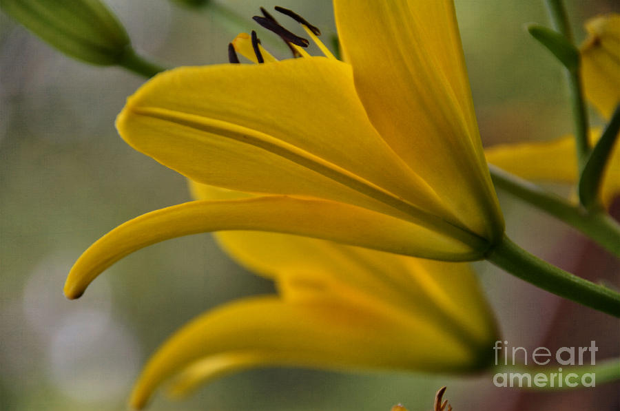 Yellow Photograph - Sundrenched by Tamera James