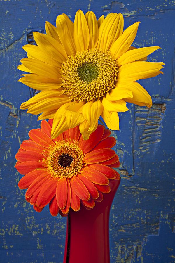 Sunflower Photograph - Sunflower And Mum by Garry Gay