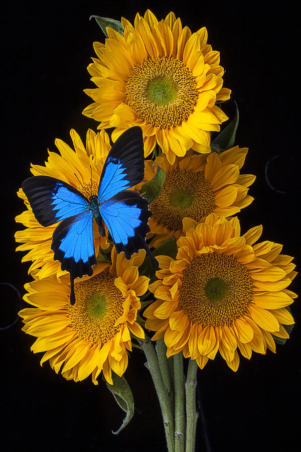 Five Photograph - Sunflower Bouquet  by Garry Gay