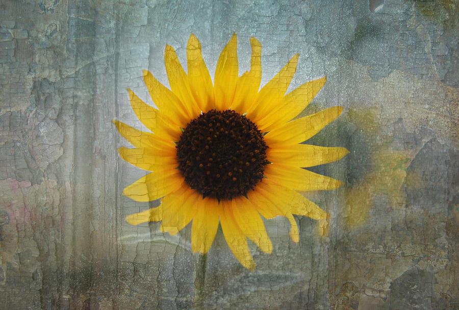 Sunflower Photograph - Sunflower Burst by Lisa Moore