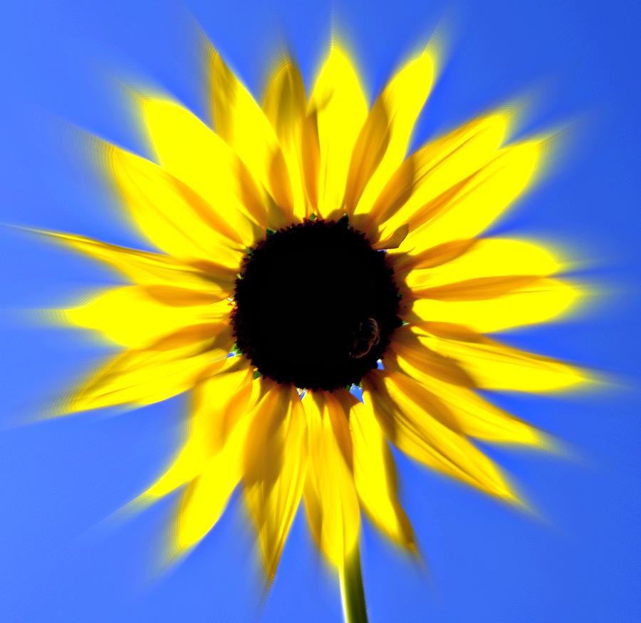 Sunflower Photograph - Sunflower Burst by Marty Koch