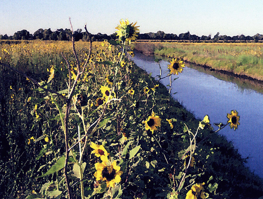 Landscape Photograph - Sunflower Canal by Eunice Olson