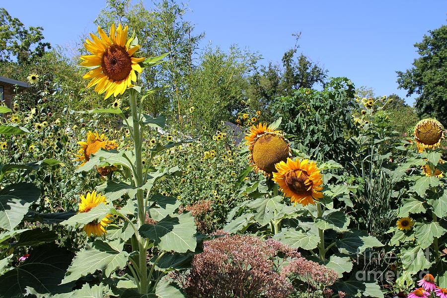 Sunflowers Photograph - Sunflower Garden by Theresa Willingham