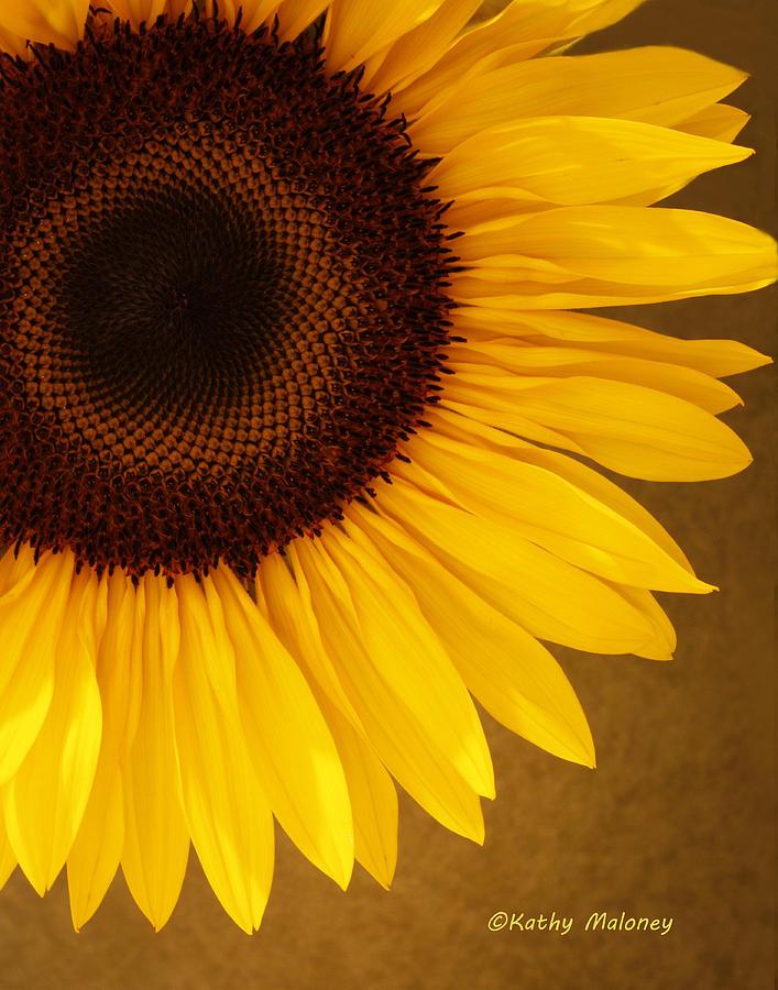 Sunflower by Kathy Maloney