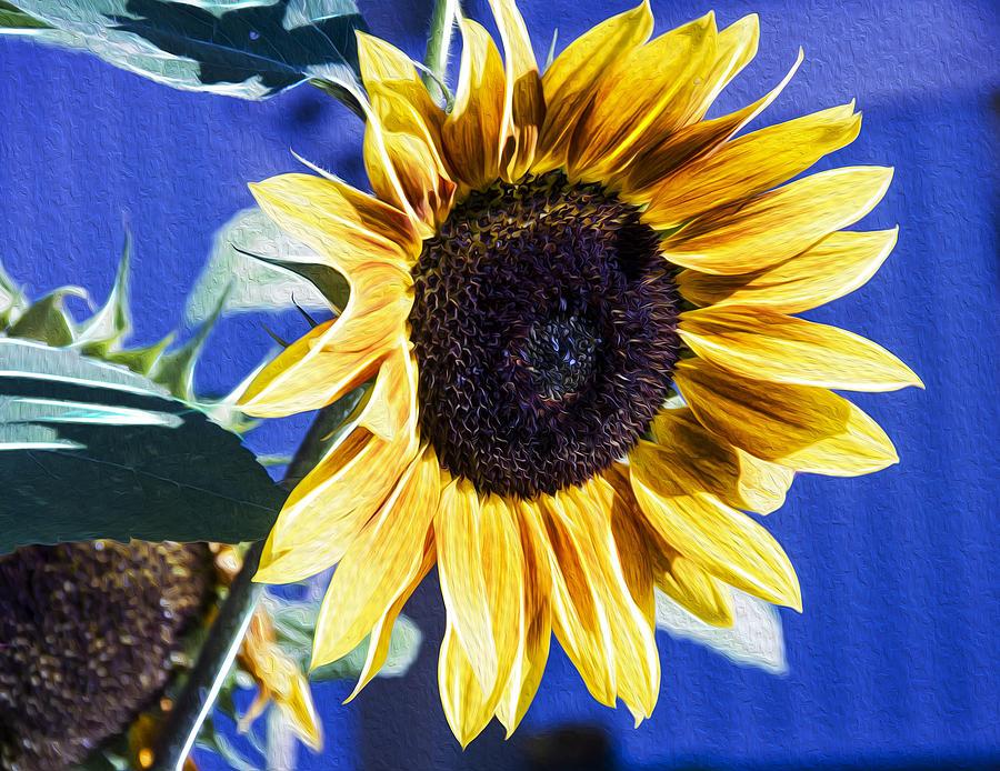 Flower Photograph - Sunflower by Linda Tiepelman
