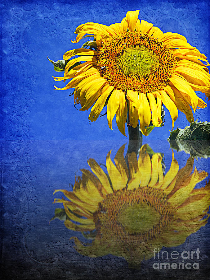 Sunflower Photograph - Sunflower Reflection by Andee Design