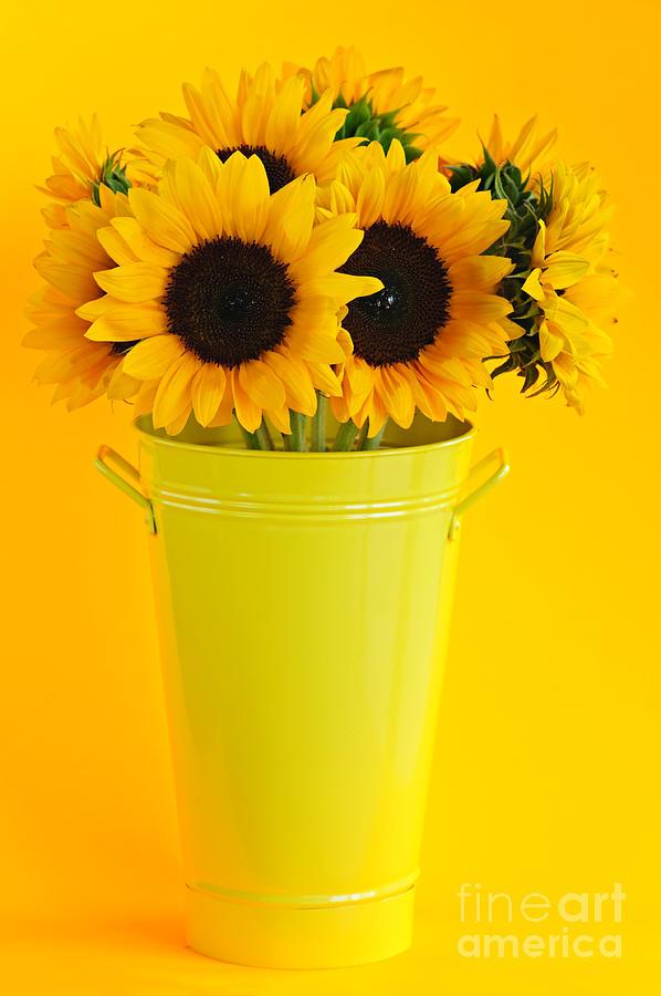 Vase Photograph - Sunflowers In Vase by Elena Elisseeva