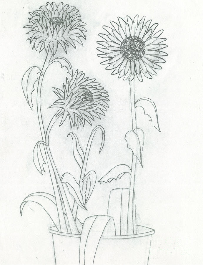 how to draw a sunflower field
