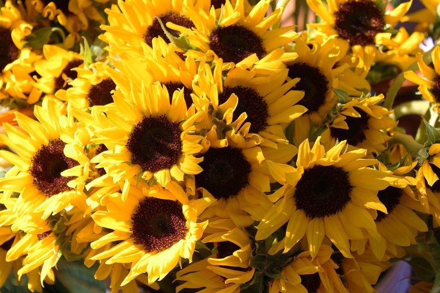Sunflowers Photograph - Sunflowers by Paulette Thomas