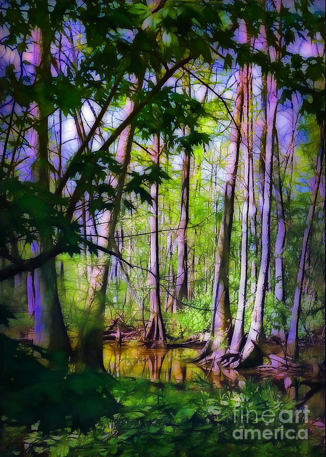Swamp Photograph - Sunlight In The Swamp by Judi Bagwell