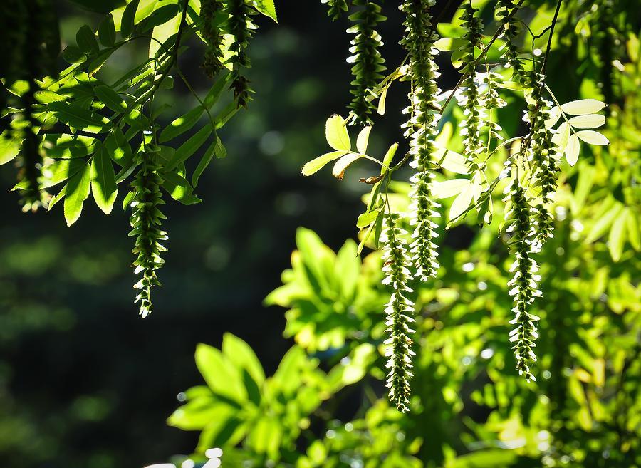 Arboretum Photograph - Sunlight Through Branches by Ronda Broatch