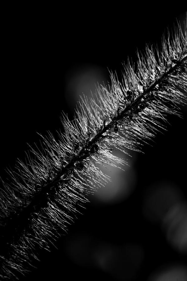 Grass Photograph - Sunlit Grass by Christine Gauthier