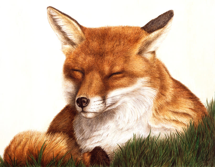 Red Fox Painting - Sunnin by Pat Erickson