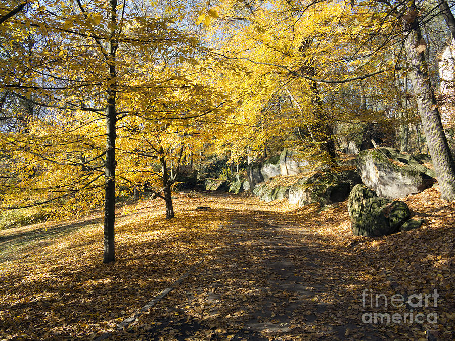 Park Photograph - Sunny Day In The Autumn Park by Michal Boubin