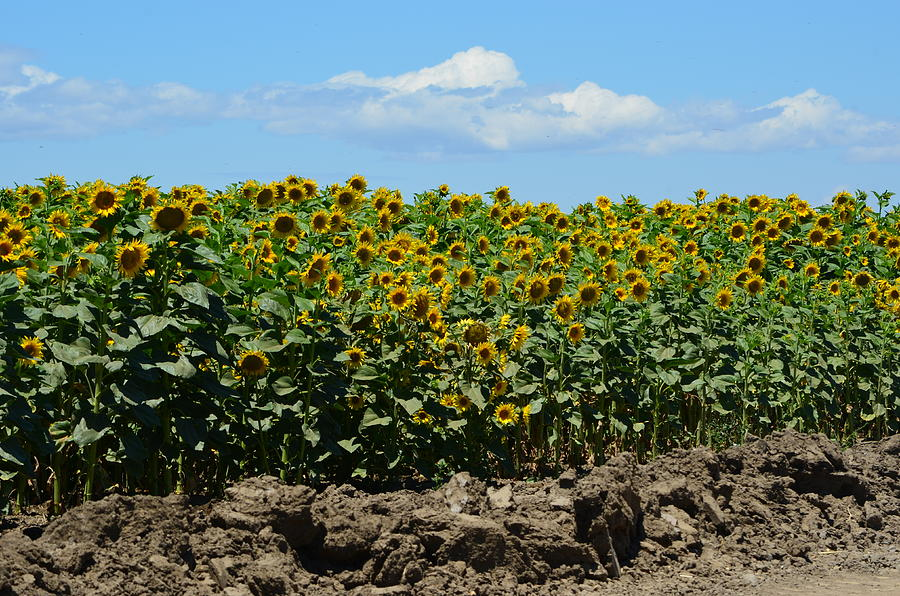 Sunny Day Photograph - Sunny Day by Melissa  Maderos